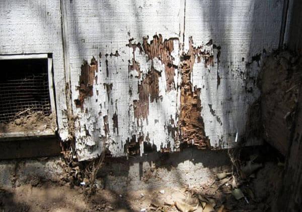 Termite Wood Damage Repair Los Angeles Ca Atwater Village Silver Lake Echo Park Los Feliz